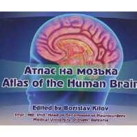 Атлас на мозъка От Специализирана...